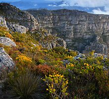 Top of Table Mountain by Cameron B