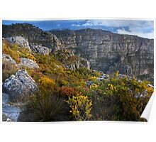 Top of Table Mountain Poster