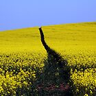 009 Rape Field, Shropshire by George Standen