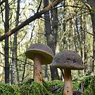 Mushroom Soldiers . by relayer51