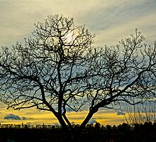 Loney tree at sunset by D-GaP