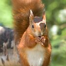 Pretty squirrel is pretty by Anthony Brewer