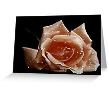 """"""" First Rose of the Season..."""" Greeting Card"""