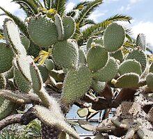 Tall Cacti by AnnDixon