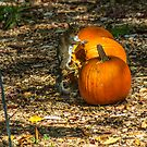 What? I like Pumpkins Too!! by Cynthia Broomfield