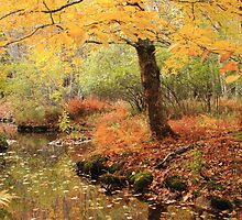White Ash and Stream in Autumn by Roupen  Baker