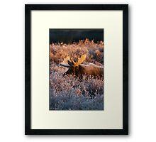 Moose Glow Framed Print