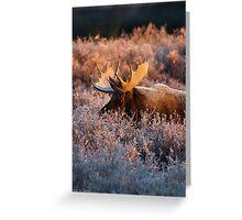 Moose Glow Greeting Card