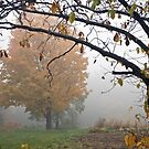 Foggy October Morning by KAREN SCHMIDT