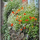 Window boxes by Jeananne  Martin