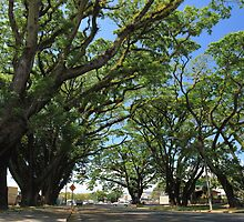 MCC Mossman Raintrees by Mossman  Community Centre