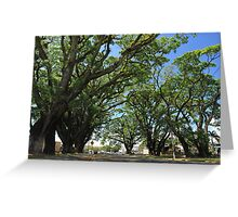 MCC Mossman Raintrees Greeting Card
