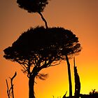 Two Tree Silhouette by fotosic