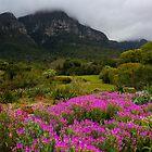 Spring in Kirstenbosch  by Cameron B