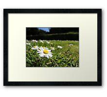 One in a million - Daisy Framed Print