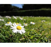 One in a million - Daisy Photographic Print