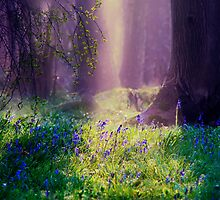 Enchanted Woods by Dawn Cox