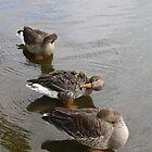 Trio of ducks by copacic