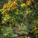Autumn along the creek by Jeannie Peters