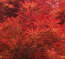 Red leaves in the autumn by jonshock