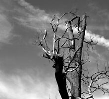 Stark Bare Tree by copacic