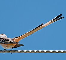 What a LONG tail you have! by Bonnie T.  Barry