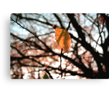 All the leaves fall down Canvas Print