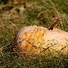 Bumpy Pumpkin by HeavenOnEarth