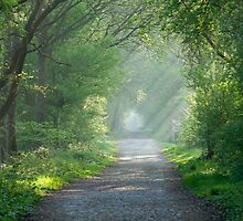 Countryside track and sunbeams by Sue Robinson
