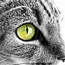 Emerald cat eyes in Black and white by Sarah St. Pierre
