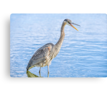 Happy in my pond Canvas Print