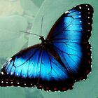 Blue Butterfly by Anne Seltmann