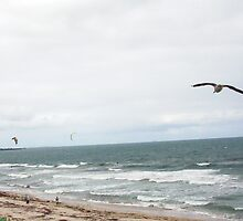 Hang Glide With Seagull 14 10 12 by Robert Phillips