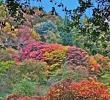Autumn Trees by John Thurgood