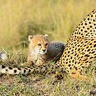 baby cheetah by nicolemarie72