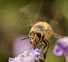 Honey Time by D-GaP