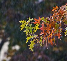 October Rain by Tom Gotzy