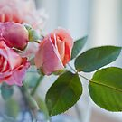 Roses from my garden by Jenni Greene