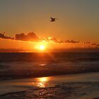 Sunrise Flight, Provincetown Massachusetts by Debbie Pinard