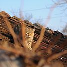 Cat on the roof by Tataran Mihai - Razvan