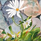 Daisies in the Stones by Sally Griffin