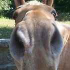 Friendly Horse up Close and Personal  by dww25921