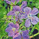 5 Wild Geraniums by Morgan Ralston