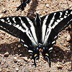 Butterfly Beauty by CADavis
