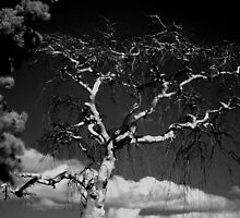 Devil Tree by bradydhebert