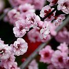 Flowering Cherry by Heike Richter