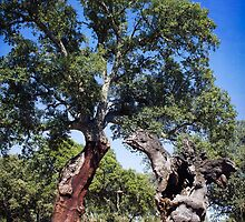 Cork Oak by Wendy  Rauw