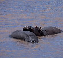 Hippo Heaven by Sue Robinson