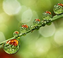 Autumn Dew Drops by Sharon Johnstone