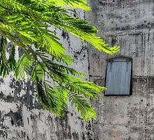 The Hidden Window at Fort Charlotte in Nassau, The Bahamas by 242Digital